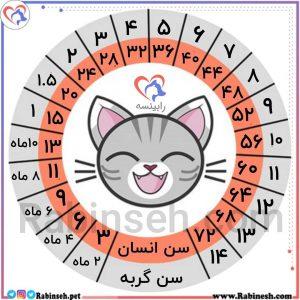معادل سن گربه با انسان