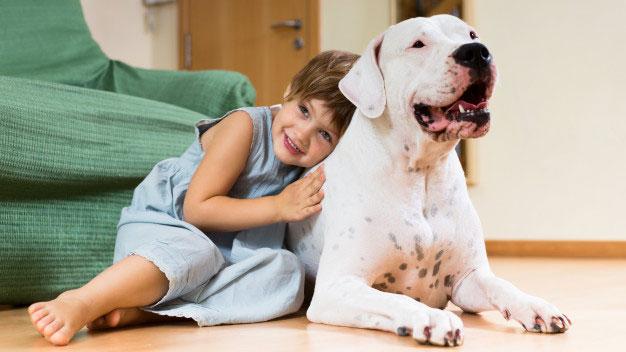 شناخت رفتار سگ