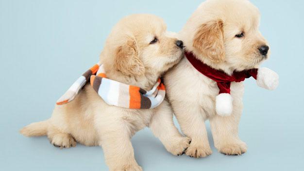 آموزش تربیت و نگهداری توله سگ