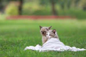 آموزش نگهداری بچه گربه
