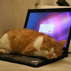 علاقه گربه به لپ تاب