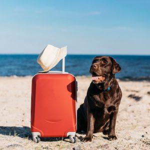 آموزش سفر بردن سگ