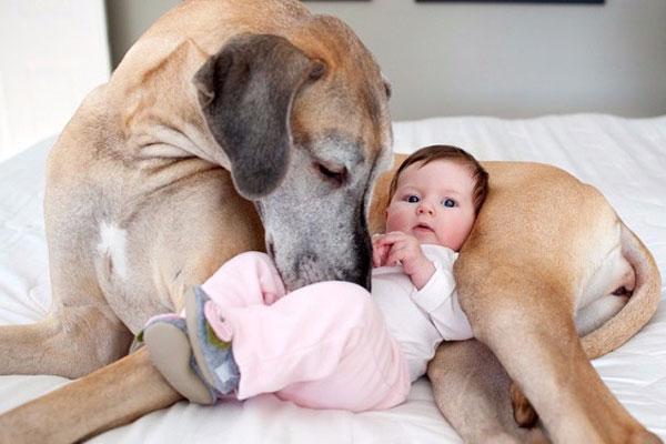 معرفی سگ به بچه ها