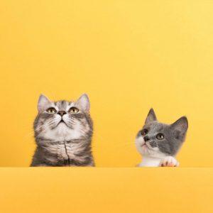 نشانه بیماری گربه ها