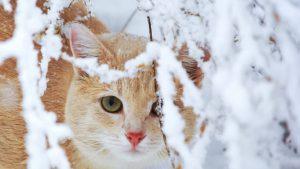 سرمازدگی گربه