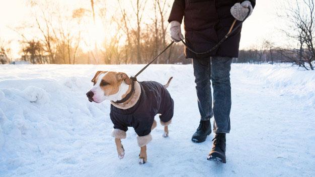 یخ زدگی سگ