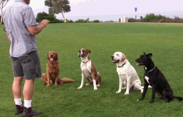 چگونه تربیت کردن سگ ها