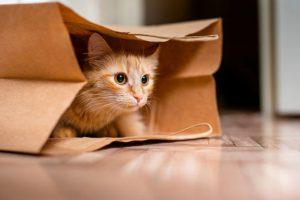 رفتار گربه ها