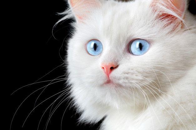 رفتارهای طبیعی گربه ها