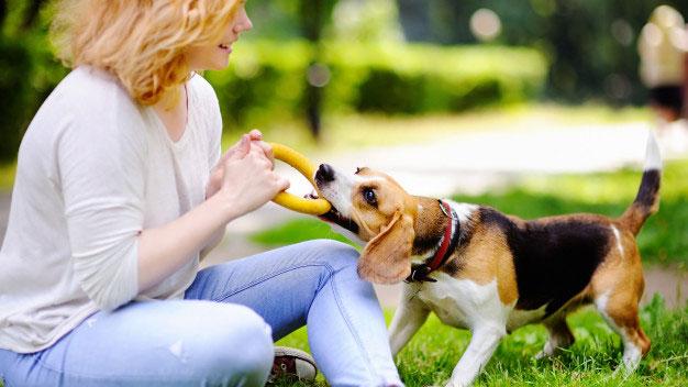 جلوگیری از گاز گرفتن سگ