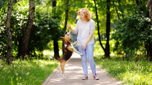 چگونه سگ خود را تربیت کنیم