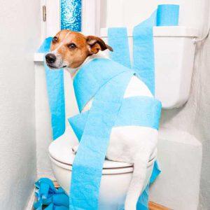 آموزش دستشویی کردن توله سگ
