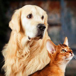 گربه بگیرم یا سگ
