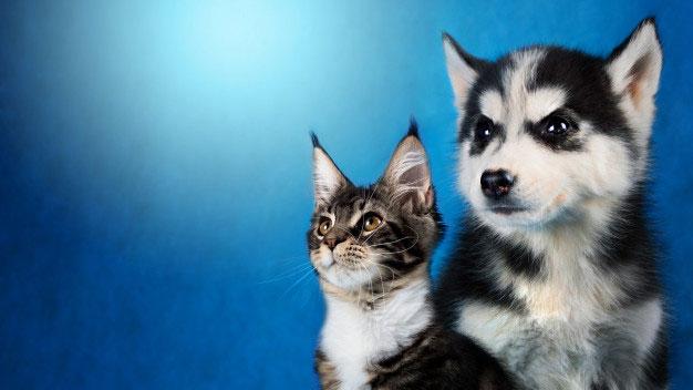 سگ بخرم یا گربه ؟