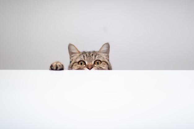 تنها موندن گربه و بچه گربه