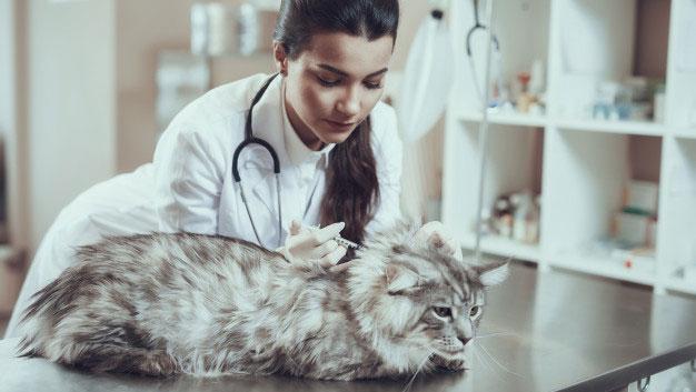 زمان واکسن گربه
