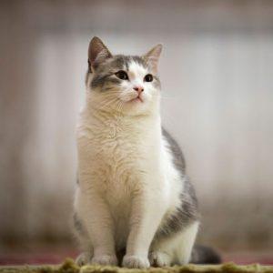 تنها ماندن گربه در خانه