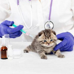زمان واکسن زدن بچه گربه