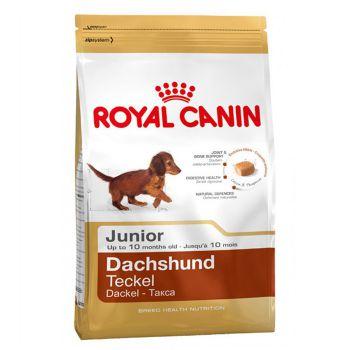 غذای خشک سگ نژاد داشهوند 2 تا 10 ماه