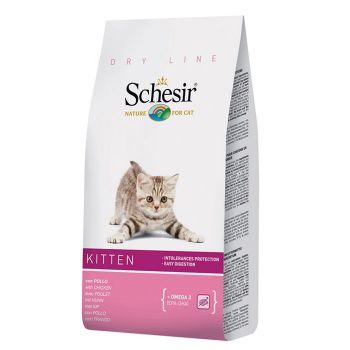 غذای خشک مخصوص بچه گربه