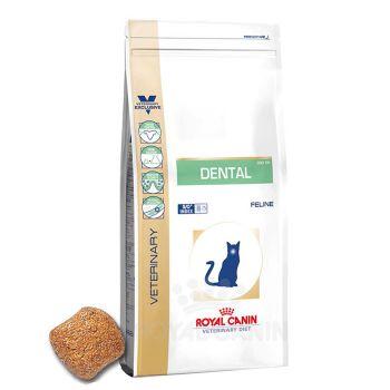 غذای خشک گربه مبتلا به بیماری های دهان و دندان