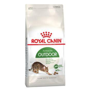 غذای خشک گربه های بالغ خارج خانه