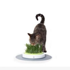 بذر علف گربه با ظرف مخصوص