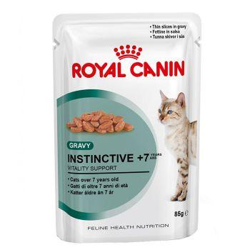 پوچ گربه بالای 7 سال -بهداشت دهان