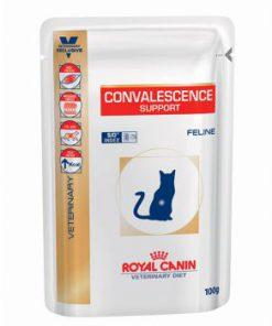 پوچ گربه برای ریکاوری و دوره نقاهت