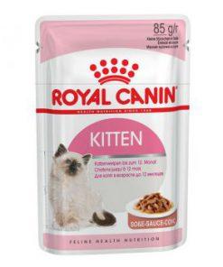 پوچ بچه گربه 4 تا 12 ماه در گوشت