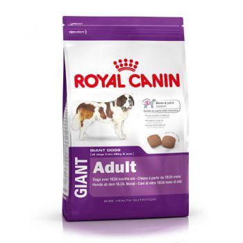 غذای سگ نژاد خیلی بزرگ بالای ۲۴ ماه