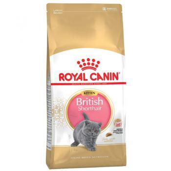 غذای خشک بچه گربه نژاد بریتیش 4 تا 12 ماه