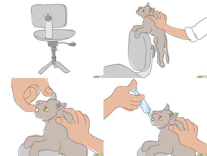 شربت دادن به گربه