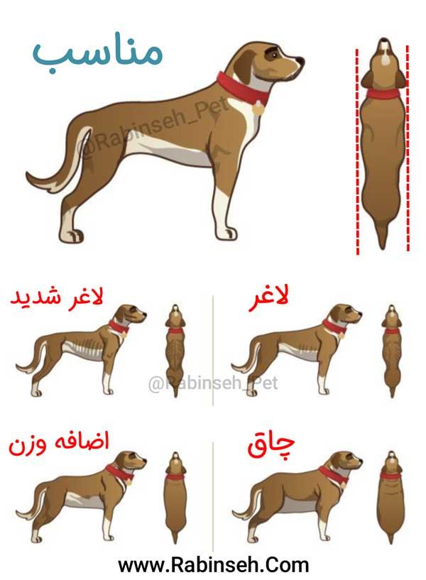 افزایش طول عمر سگ خانگی