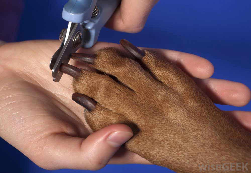 آموزش ناخن گرفتن سگ