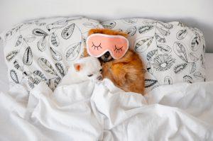 خواب زیاد سگ