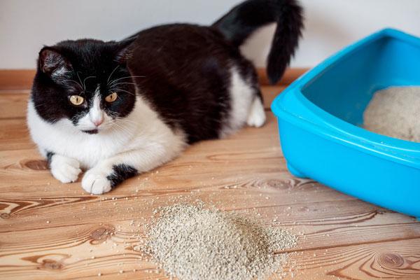 خاک مناسب گربه