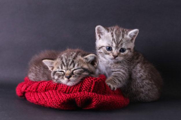 وسایل نگهداری گربه