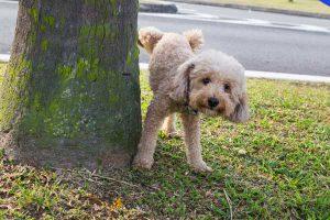 علت ادرار نامناسب سگ در خانه