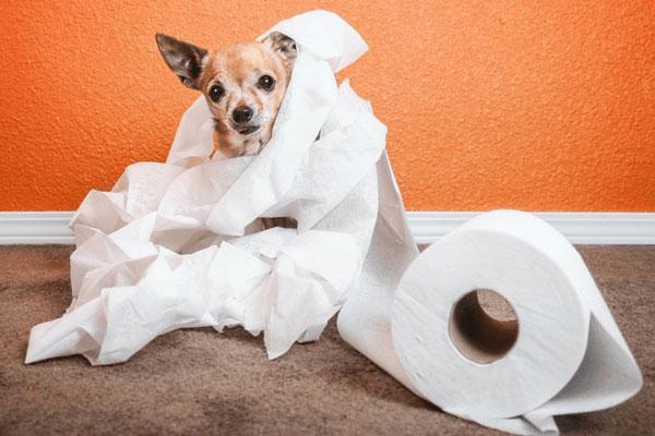 رفع ادرار کردن سگ