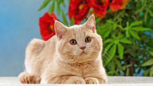 تربیت گربه فقط در 5 قدم یاد بگیرید
