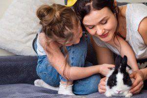 لوازم نگهداری خرگوش