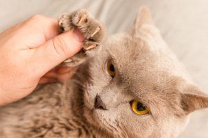 آموزش ناخن گرفتن گربه