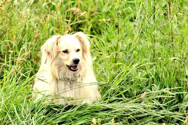وجود خون در ادرار سگ به چه دلیل است؟
