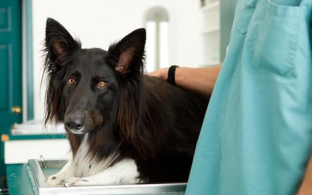 درمان خانگی خون در ادرار سگ