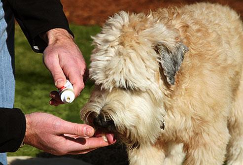 تست خمیر دندان توسط سگ