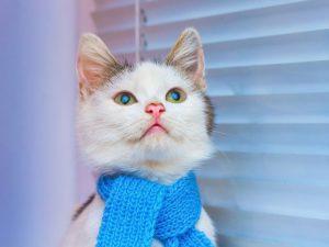 دلیل علاقه گربه به ارتفاع
