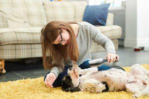 بیماری پوستی سگ و گربه و 10 راه مراقبت آن