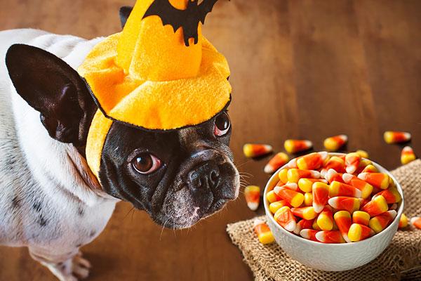 مضرات غذایی سگ ها