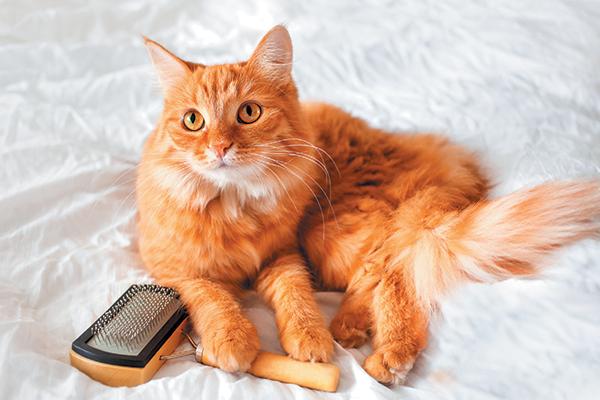 لیسیدن گربه ها